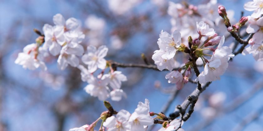 10 spring reflection questions for new beginnings